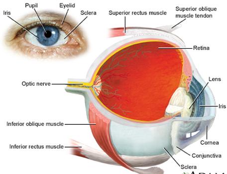 Retina1234